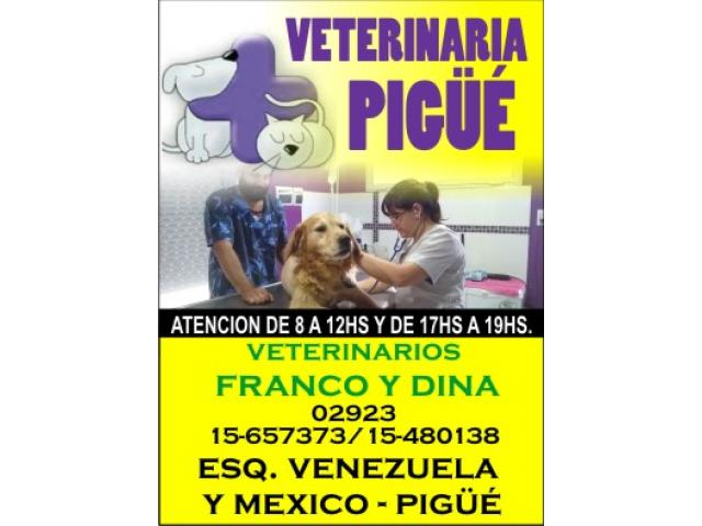 Veterinaria PIGUE