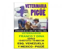 Veterinaria PIGUE
