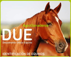 Andrade, Juan Cruz